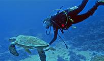 Aquaworld Cancun PM 2 Tank Reef Dive